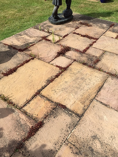Patio cleaning services